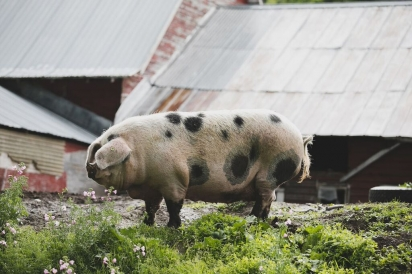 Vermont's Ardelia Farm