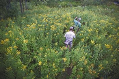 Finding their way through a field