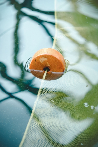 Net in the pond